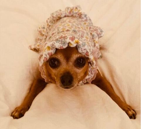 イミンホ,愛犬,チョコ